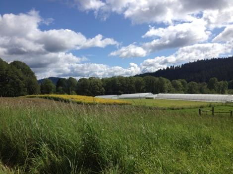 A rare sunny moment at Winter Green Farm in Noti, Oregon